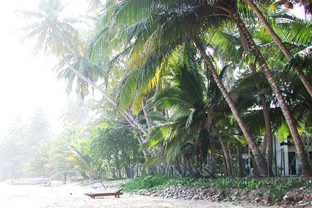 Sommer, Palmen, Sonnenschein - Was kann schöner sein?