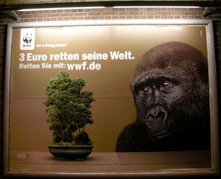 gorilla-3-euro.jpg