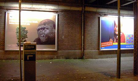 gorilla-vs-maedchen.jpg