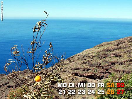 Die Einsamkeit der Orange