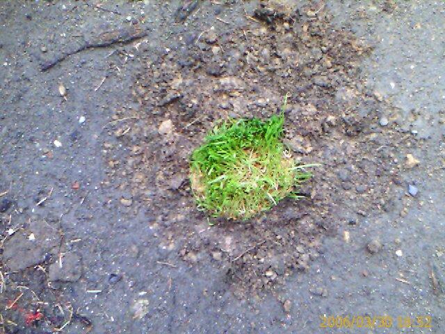 Ungeduld fordert Frühjahrsheldentum